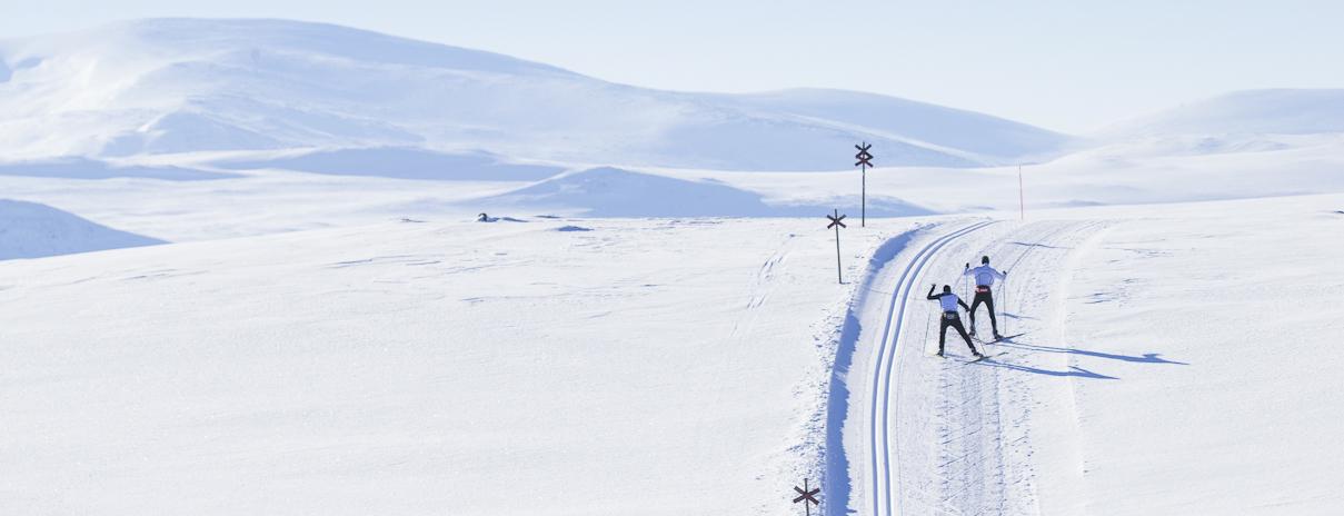 vilken längd på skidor längdskidor