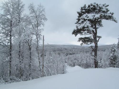 snöhögar